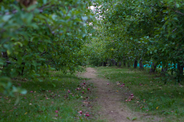 Apple Picking Sept