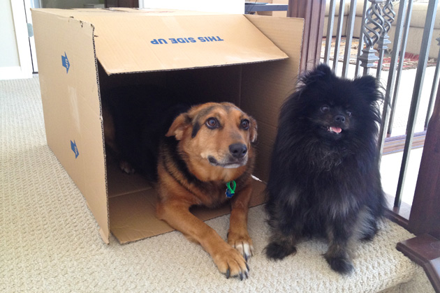 Our dogs Lexy and Pebbles, Lexy is in the box